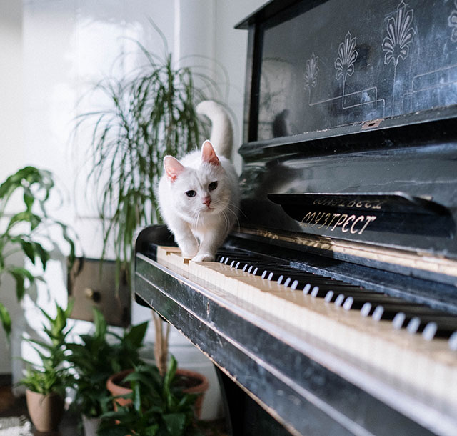 cat walking across piano keys with plants in background of music room